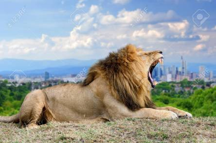 Lion with the city of on the background